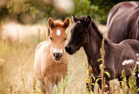 fotos pferden das pferd ehorses magazin alles rund ums pferd
