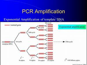 fantastic pcr template gallery example resume ideas With pcr template amount