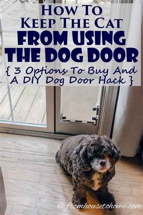 cat    dog door