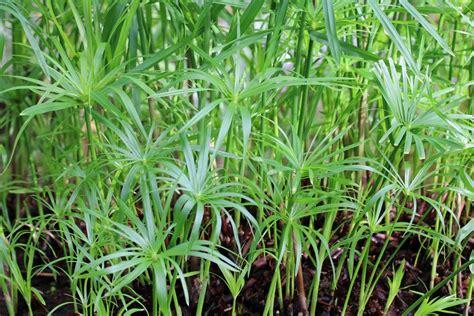 Pflanzen Für Katzen Geeignet by Ungiftige Zimmerpflanzen F 252 R Katzen 20 Sch 246 Ne Ungiftige