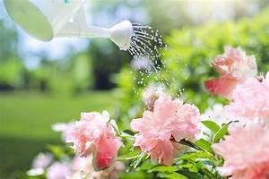 Pflanzen Im Urlaub Bewässern : so vertreiben sie wespen ganz einfach wohnen ~ Markanthonyermac.com Haus und Dekorationen