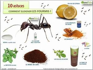 Comment éliminer Les Fourmis : 17 best images about fourmis on pinterest ~ Melissatoandfro.com Idées de Décoration