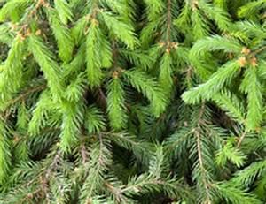 Alternative Zum Weihnachtsbaum : alternative zum weihnachtsbaum so geht 39 s mit kleinem budget ~ Sanjose-hotels-ca.com Haus und Dekorationen