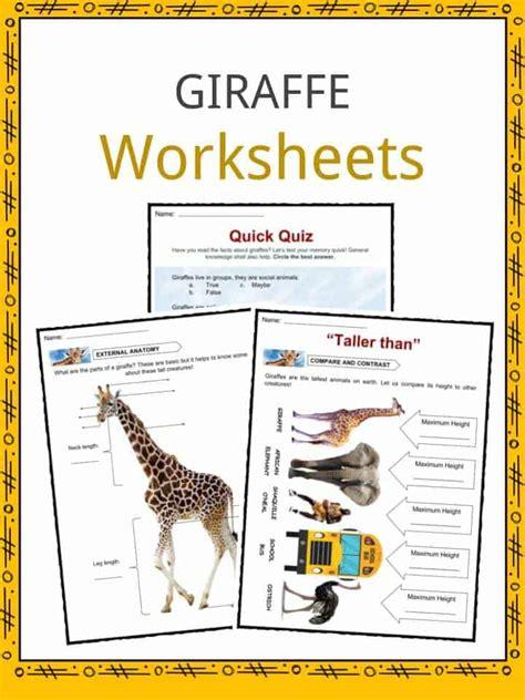 giraffe facts worksheets information  kids