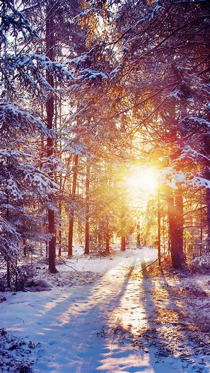 Winter Backgrounds Iphone Themed Trees Forest Sunset