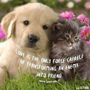Gallery: Dog And Cat Friendship Quotes, - Best Romantic Quotes