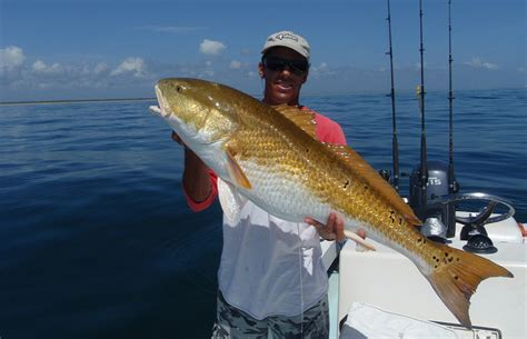 coast east florida fishing inlet caught map fishipedia