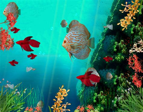 Animated Coral Reef Wallpaper - coral reef aquarium 3d animated wallpaper