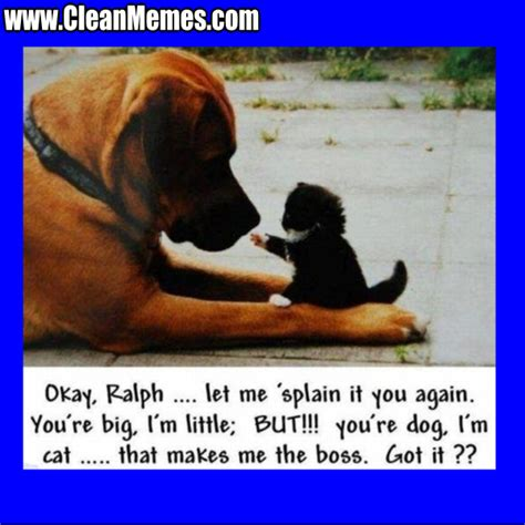 Animal Memes Clean - written by cleanmemes no comments posted in cat memes clean funny images clean memes dog
