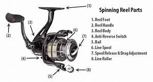 Parts Of A Spinning Reel  U2013 What You Need To Know
