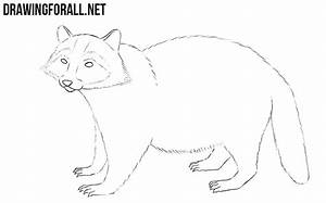 How to Draw a Raccoon | DrawingForAll.net