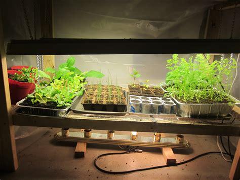 grow light seedlings grow light idaho gardening