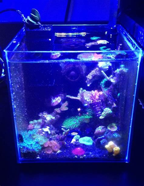 pico reef led lighting 1g sps pico my aquarium pinterest aquariums and