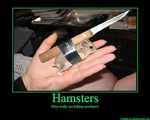 Cute Hamsters With Guns | www.pixshark.com - Images ...