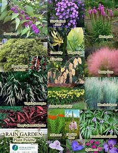 SC Rain Garden Plants List