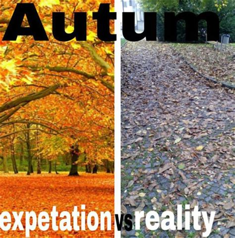 Funny Fall Memes - autumn expectation reality memes and comics