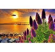 Coastal Flowers In Sunset Hd Wallpaper 604544
