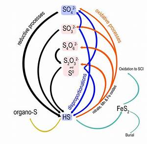 Missing Links In The Marine Sulfur Cycle  U2013 Identity And