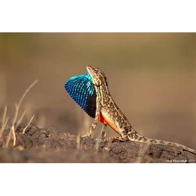 Colors of Nature by Viraj Khorjuwekar