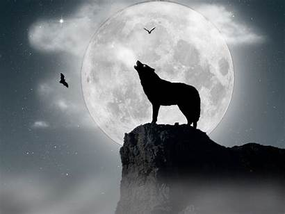 Wolf Moon Wolves Howling Wallpapers Background Desktop
