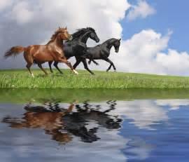 Gallop Horses - Wall Mural & Photo Wallpaper - Photowall