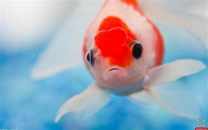 Fishes Wallpapers Fish Animals