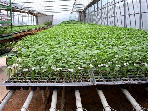 Hydroponic Gardening by Hydroponic Gardening System Hydroponic Gardening Records