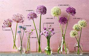 Your Guide To Alliums