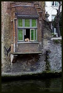 Brotkäfer Am Fenster : br gge hund im fenster hondje in brugge h user am kanal foto bild europe benelux ~ Eleganceandgraceweddings.com Haus und Dekorationen