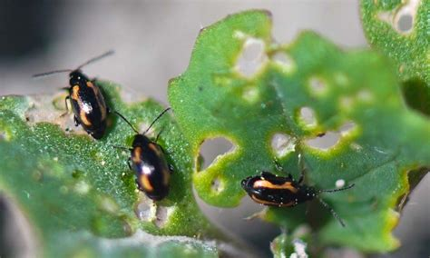10 common garden pests and natural pesticides to keep them