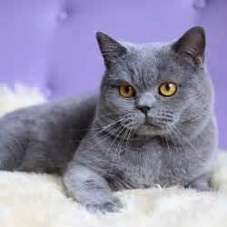 small cat breeds small cat breeds breeds picture