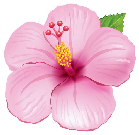 Flower PNG Transparent Flower PNG Images PlusPNG