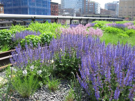 10 reasons to the high line in nyc everett potter s