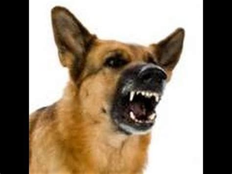 angry dog bark  growl sound effects youtube