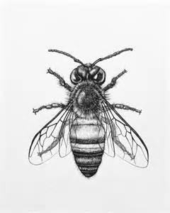 Honey Bee Drawings