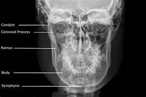 Stomatologist    Dental