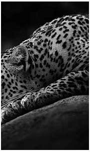 Black Jaguar Wallpaper - WallpaperSafari