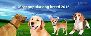 hypoallergenic dog list