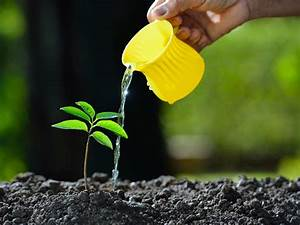 What To Feed Plants  Fertilisers Explained