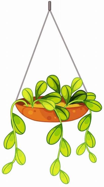Flower Clipart Hanging Plants Plant Flowers Clip