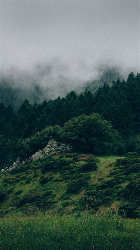 beautiful nature green forests iphone wallpaper iphone