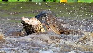 Alligator Bites Boy in Head - Teen Survives Attack. - YouTube