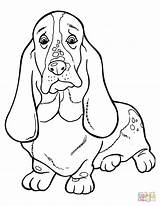 Coloring Pages Dachshund Hound Basset Printable Drawing Silhouettes Paper Kleurplaat Bassett sketch template