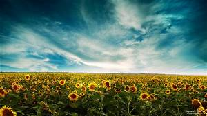sunflowers landscape wallpapers hd wallpapers id 9783