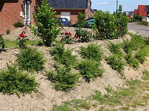 Hang Bepflanzen Pflegeleicht : heckenmyrthe 39 maigr n 39 lonicera nitida 39 maigr n ~ Lizthompson.info Haus und Dekorationen
