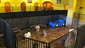 Las vegas dog boarding hotel luxury dog boarding las for Dog days las vegas