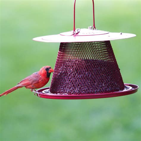 amazon com no no red cardinal bird feeder c00322 wild
