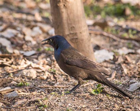 Hyperblogal Backyard Birds