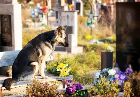 dog cremation cost     options