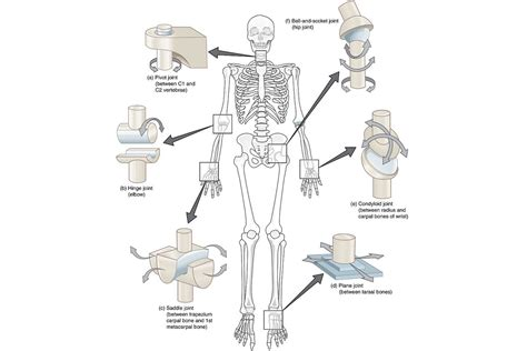 Types Of Joints And Examples,